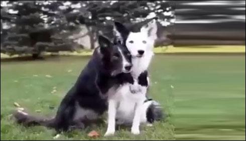 پالتو کتے
