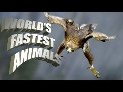 TOP, 5 ,FASTEST ,ANIMALS, ON, EARTH , AMAZING , INFORMATION
