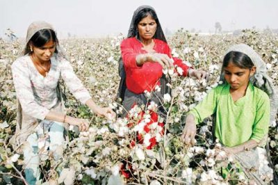 Reduction of 14 million 40 thousand bails in cotton production target