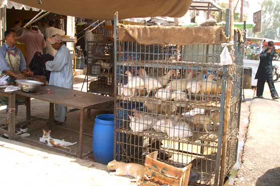 Reduction of chicken meat buyers in Karachi