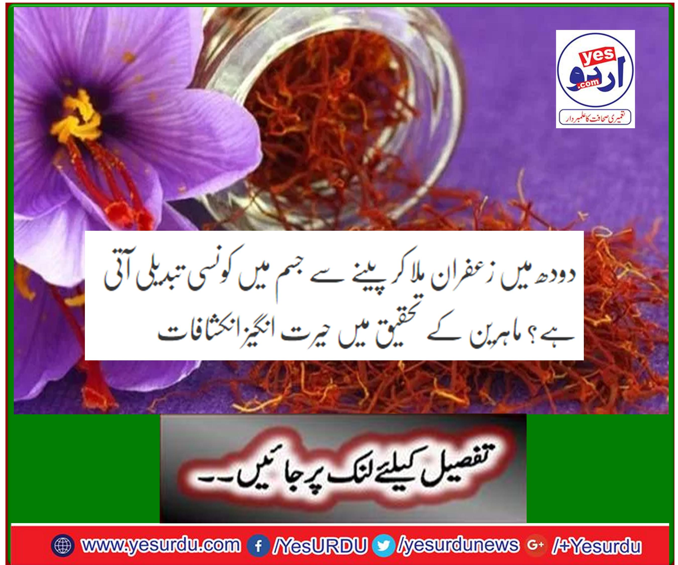 What is the change in the body by mixing saffron with milk? Amazing discoveries in the research of experts