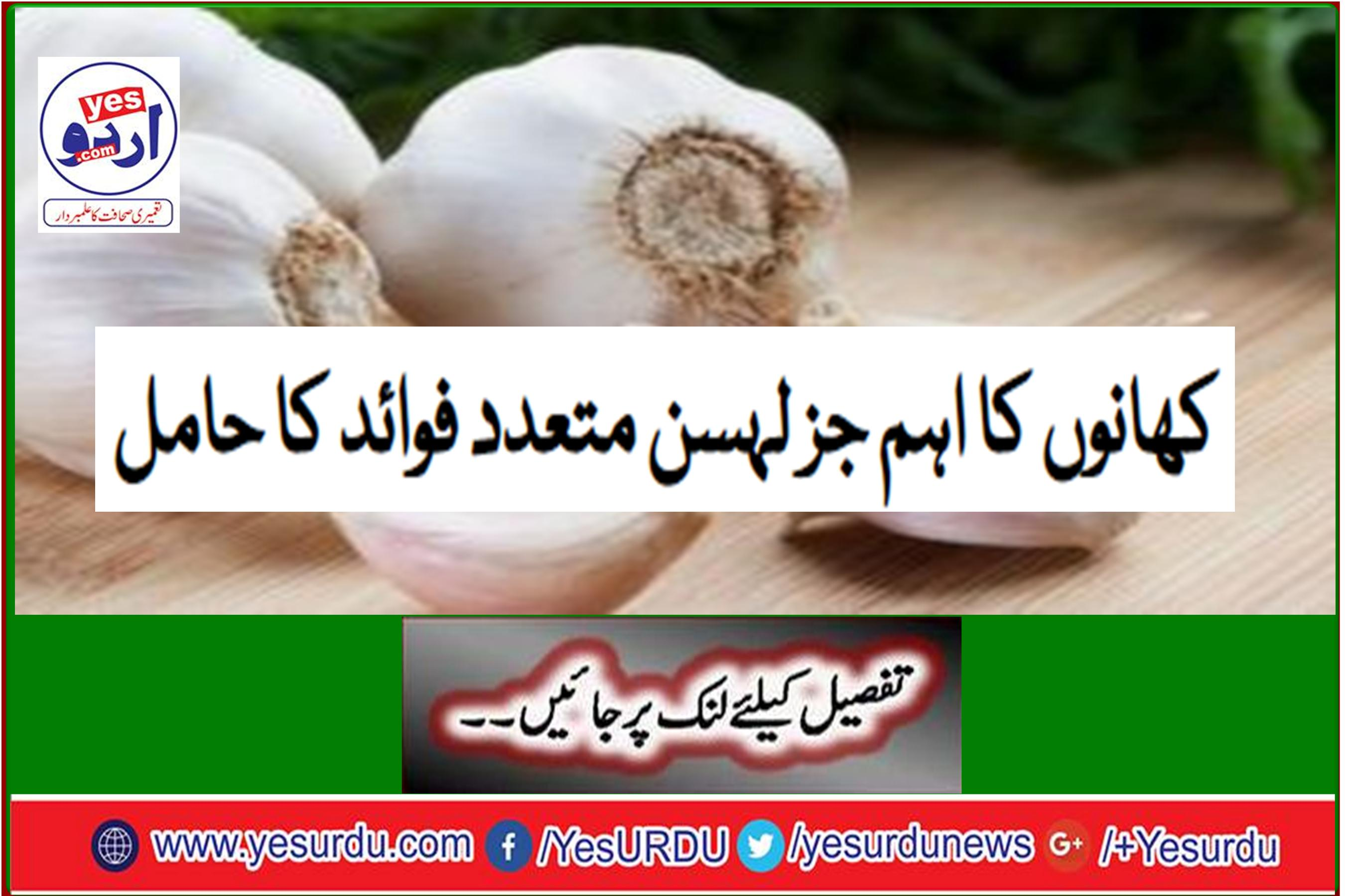 Garlic, an important component of foods, has many benefits